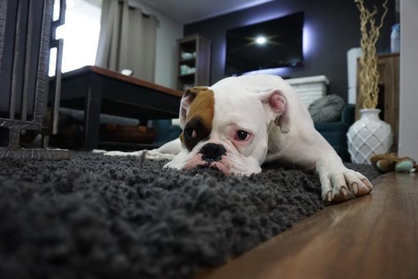 Regular carpet cleaning prolongs their life