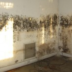 Mould & Mildew: What They Are and How to Fight Them
